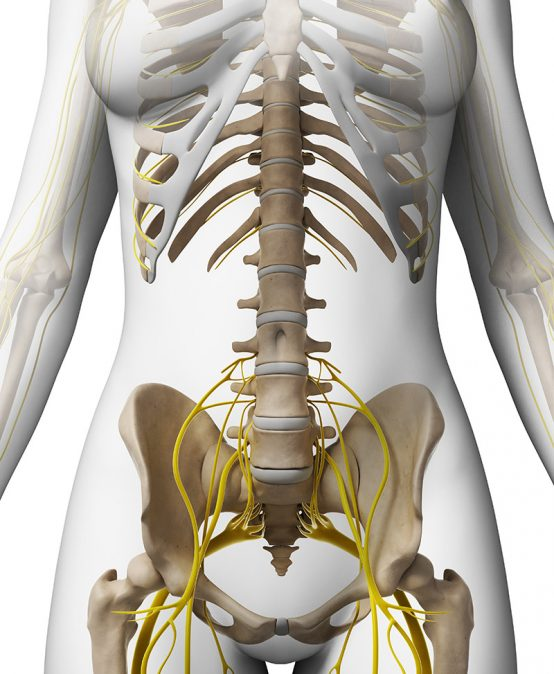 Snijzaalcursus 'Anatomie van de plexus lumbosacralis, de gluteaalregio en de lies'